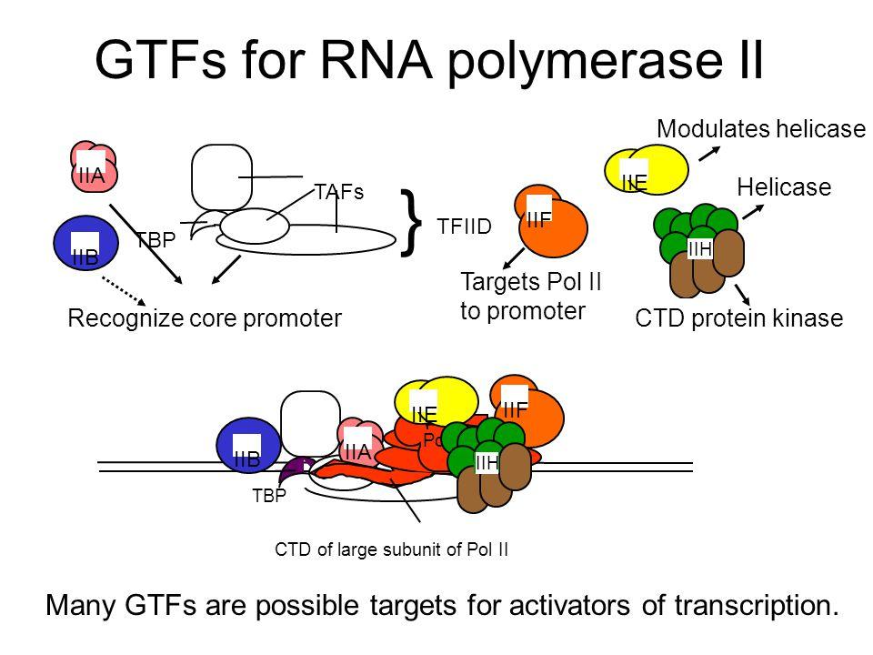 GTFs for RNA polymerase II