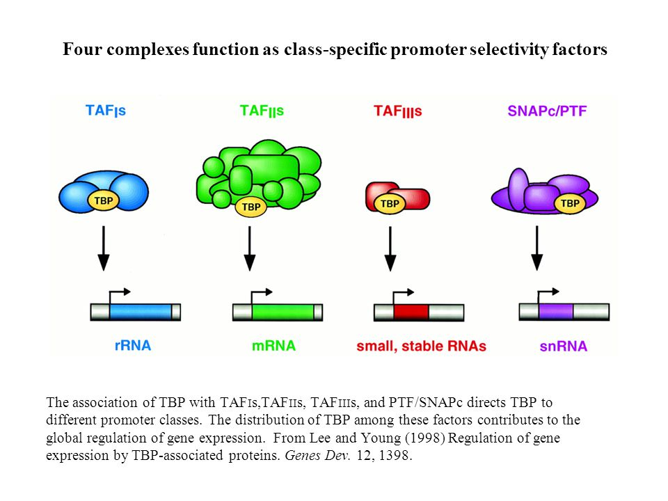 Four complexes function as class-specific promoter selectivity factors
