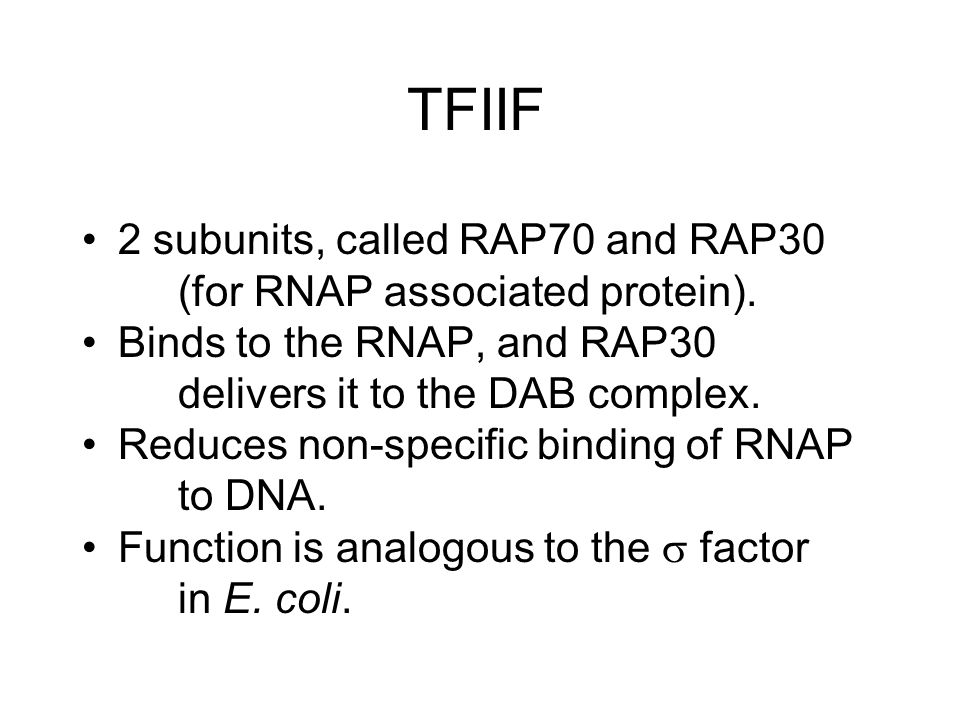 TFIIF 2 subunits, called RAP70 and RAP30 (for RNAP associated protein). Binds to the RNAP, and RAP30 delivers it to the DAB complex.