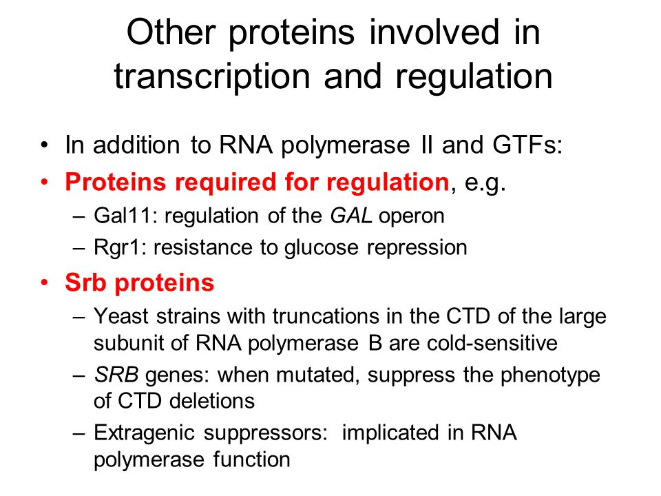Other proteins involved in transcription and regulation