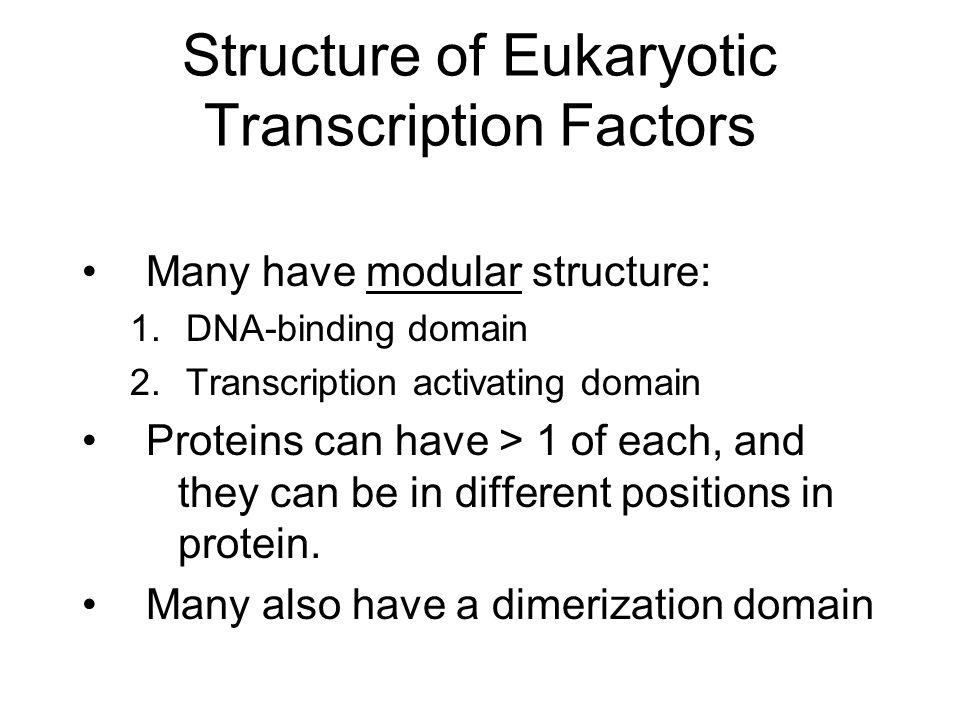 Structure of Eukaryotic Transcription Factors