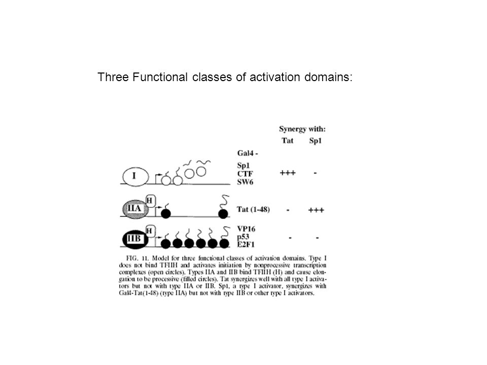 Three Functional classes of activation domains: