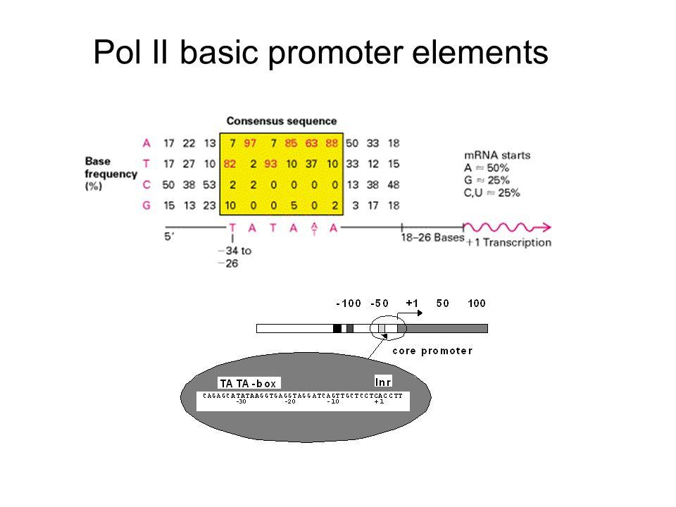 Pol II basic promoter elements