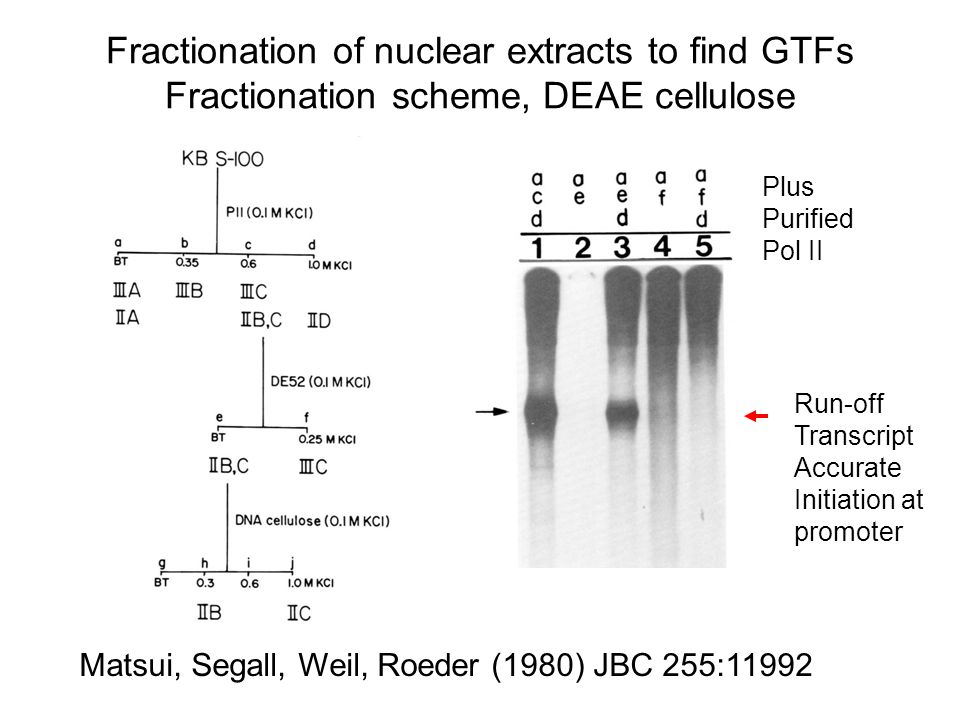 Fractionation of nuclear extracts to find GTFs Fractionation scheme, DEAE cellulose