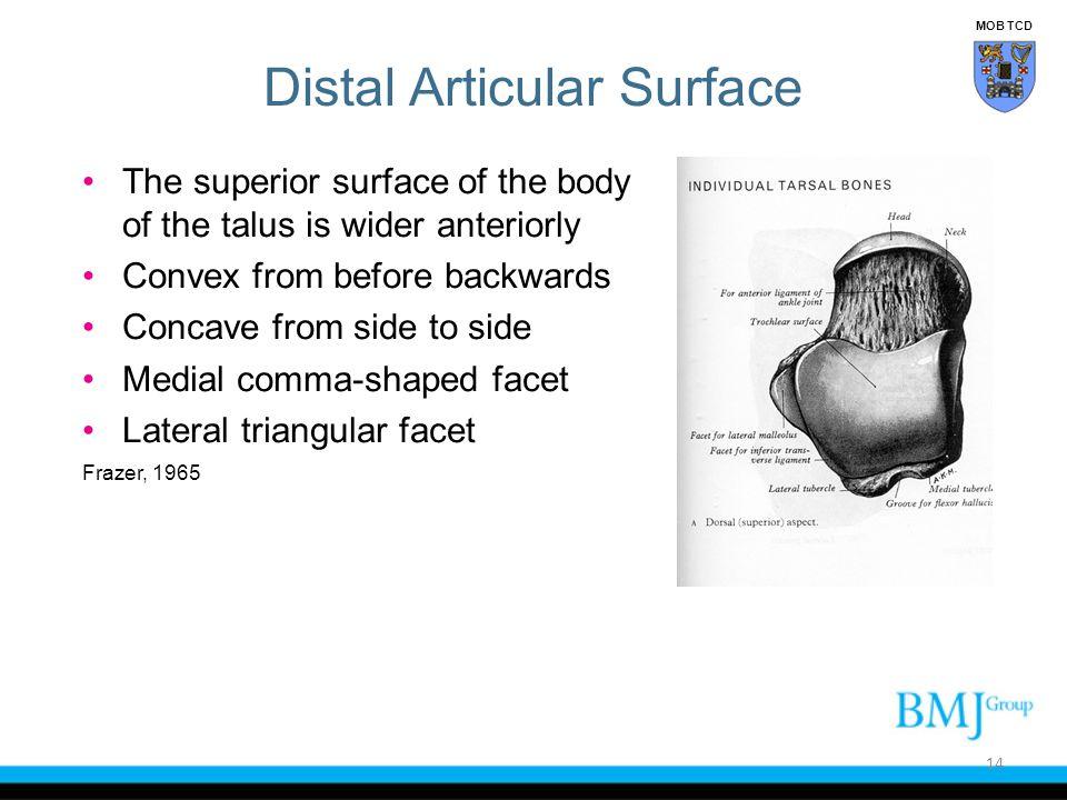 Distal Articular Surface