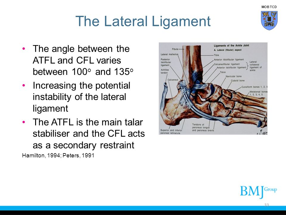 MOB TCD The Lateral Ligament. The angle between the ATFL and CFL varies between 100o and 135o.