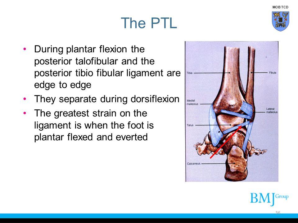 MOB TCD The PTL. During plantar flexion the posterior talofibular and the posterior tibio fibular ligament are edge to edge.