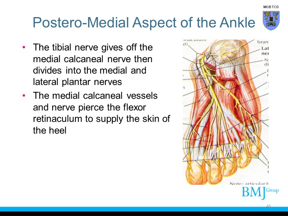 Postero-Medial Aspect of the Ankle