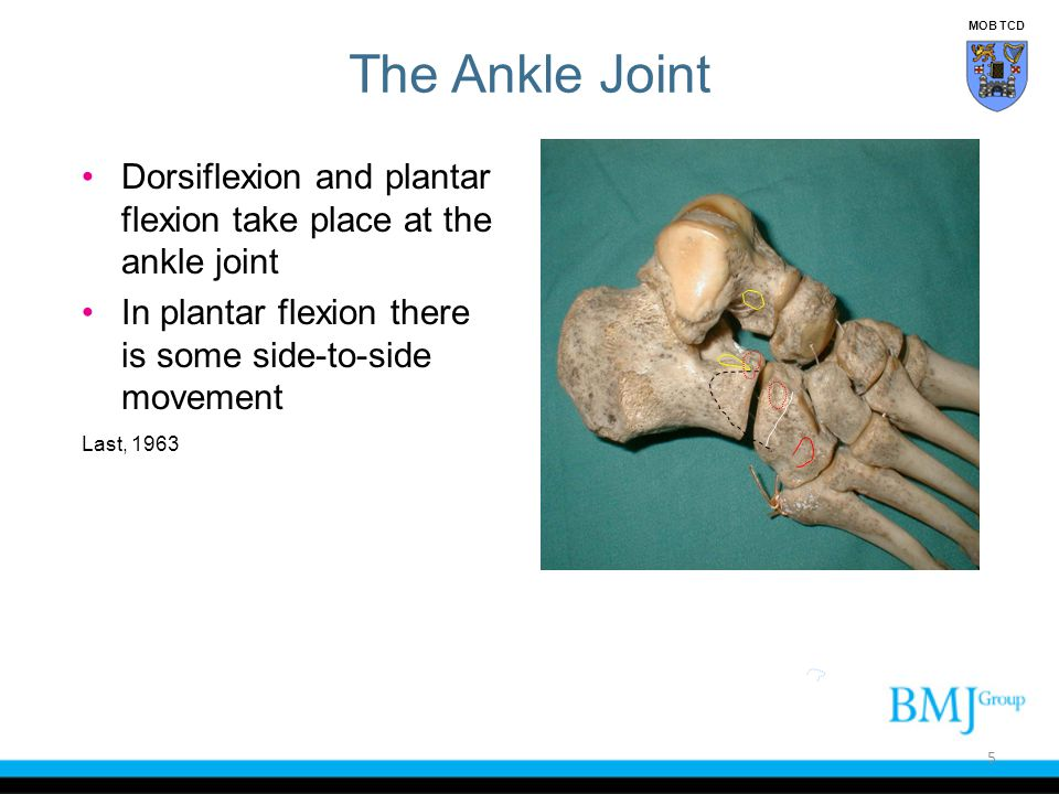 MOB TCD The Ankle Joint. Dorsiflexion and plantar flexion take place at the ankle joint. In plantar flexion there is some side-to-side movement.