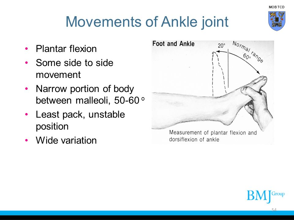 Movements of Ankle joint