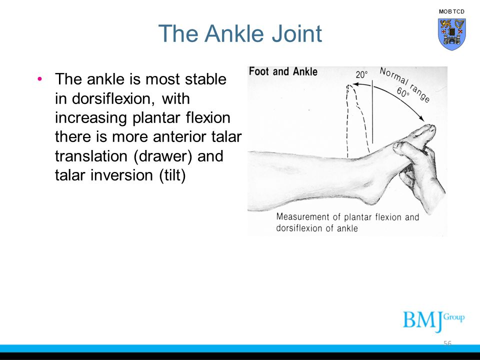 MOB TCD The Ankle Joint.