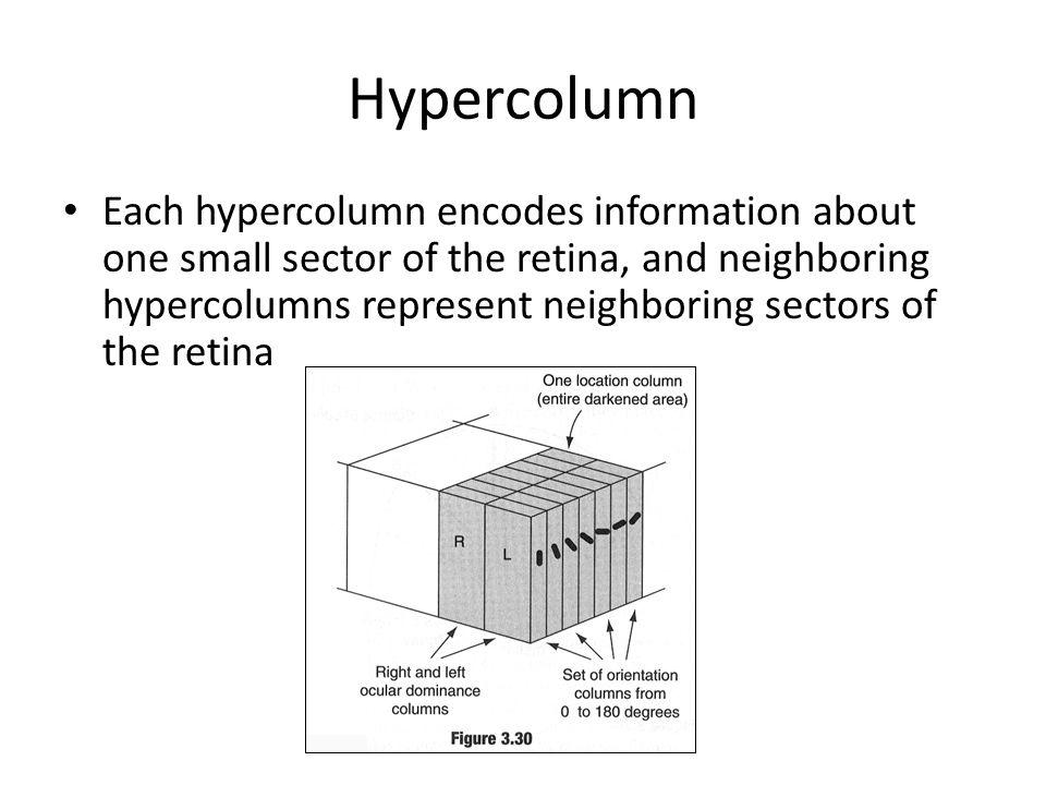 Hypercolumn