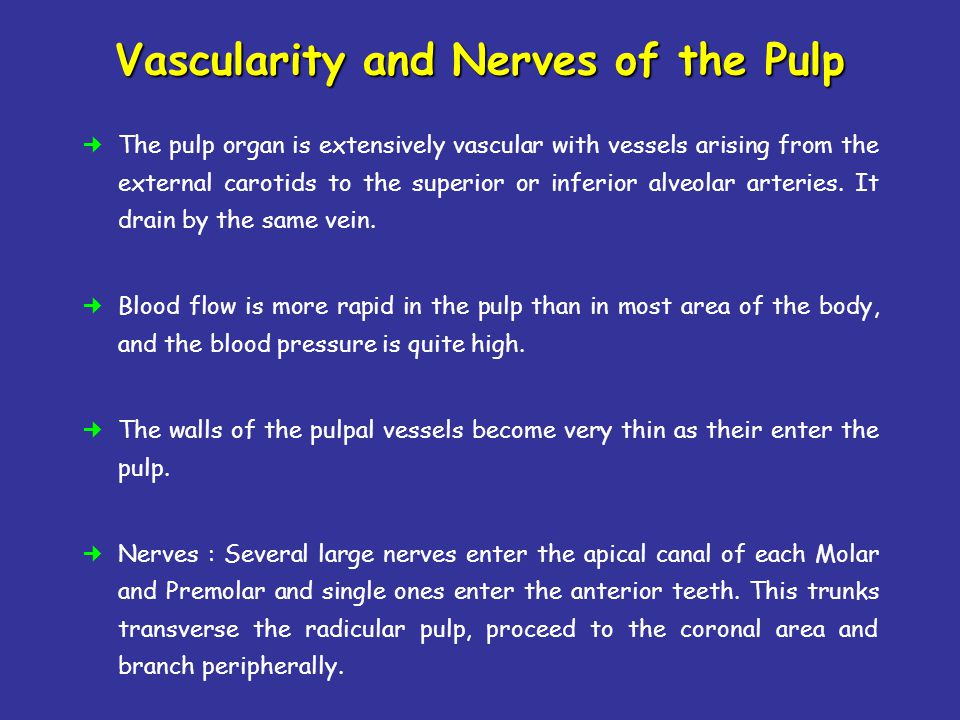 Vascularity and Nerves of the Pulp