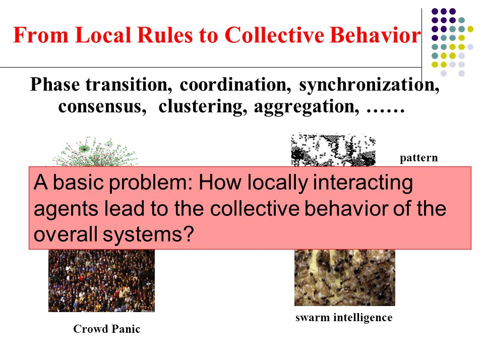 From Local Rules to Collective Behavior
