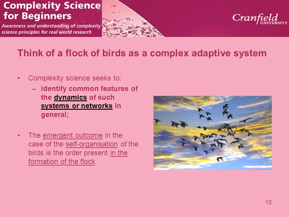 Think of a flock of birds as a complex adaptive system