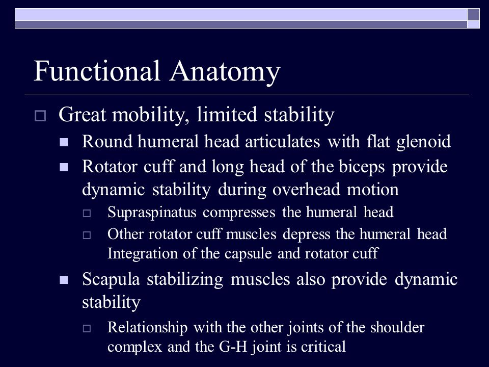 Functional Anatomy Great mobility, limited stability