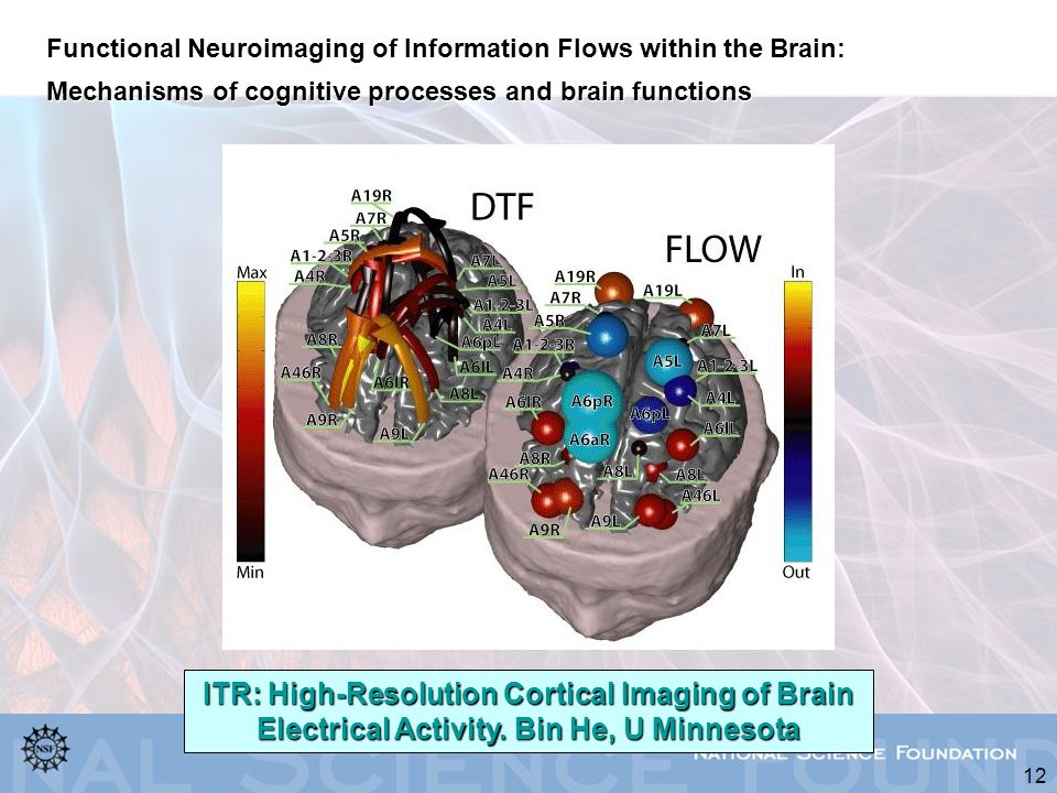 Functional Neuroimaging of Information Flows within the Brain: