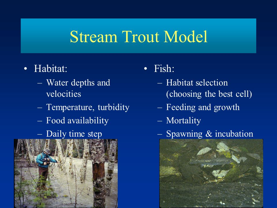 Stream Trout Model Habitat: Fish: Water depths and velocities