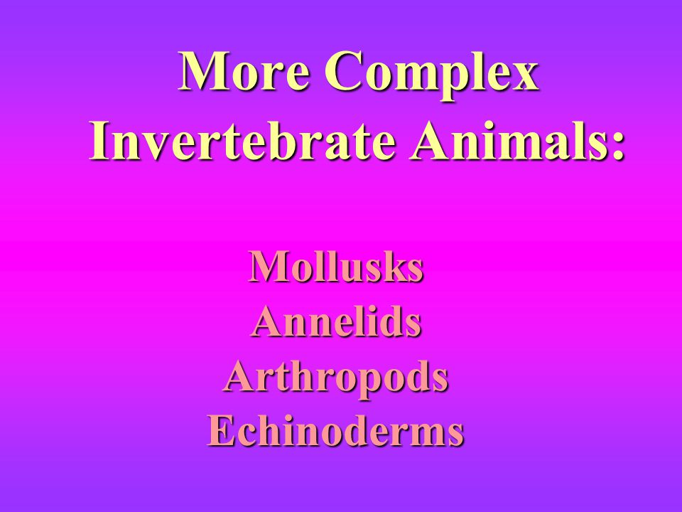More Complex Invertebrate Animals: