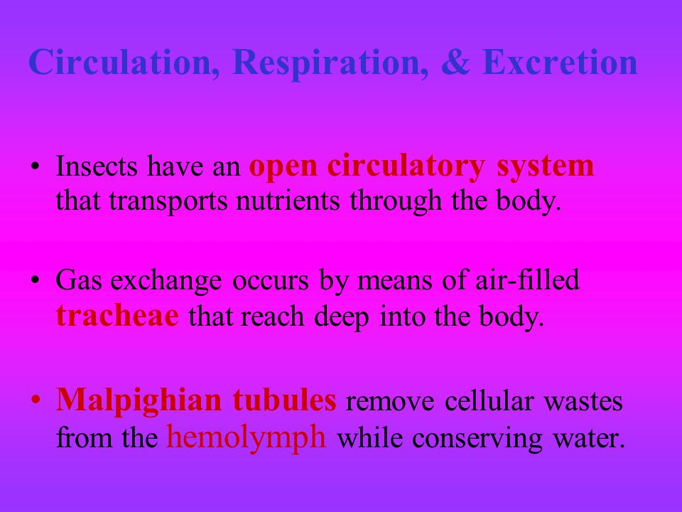 Circulation, Respiration, & Excretion