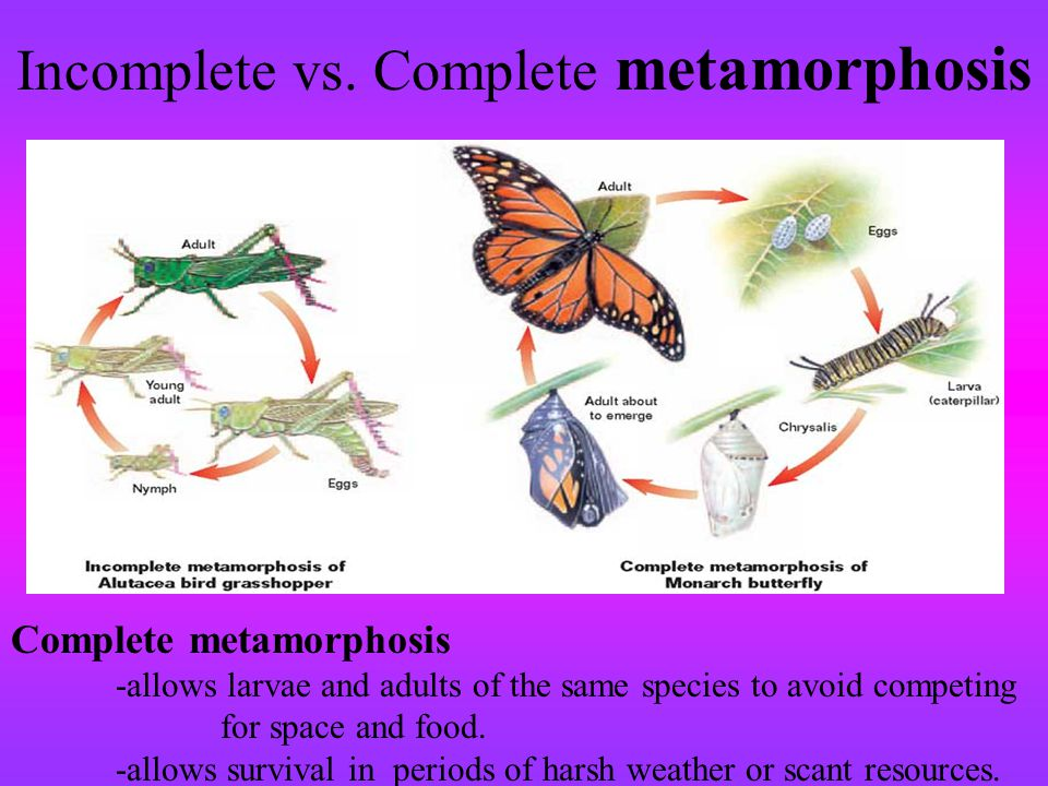 Incomplete vs. Complete metamorphosis