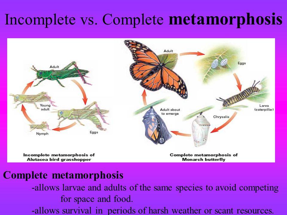 Incomplete vs. Complete metamorphosis