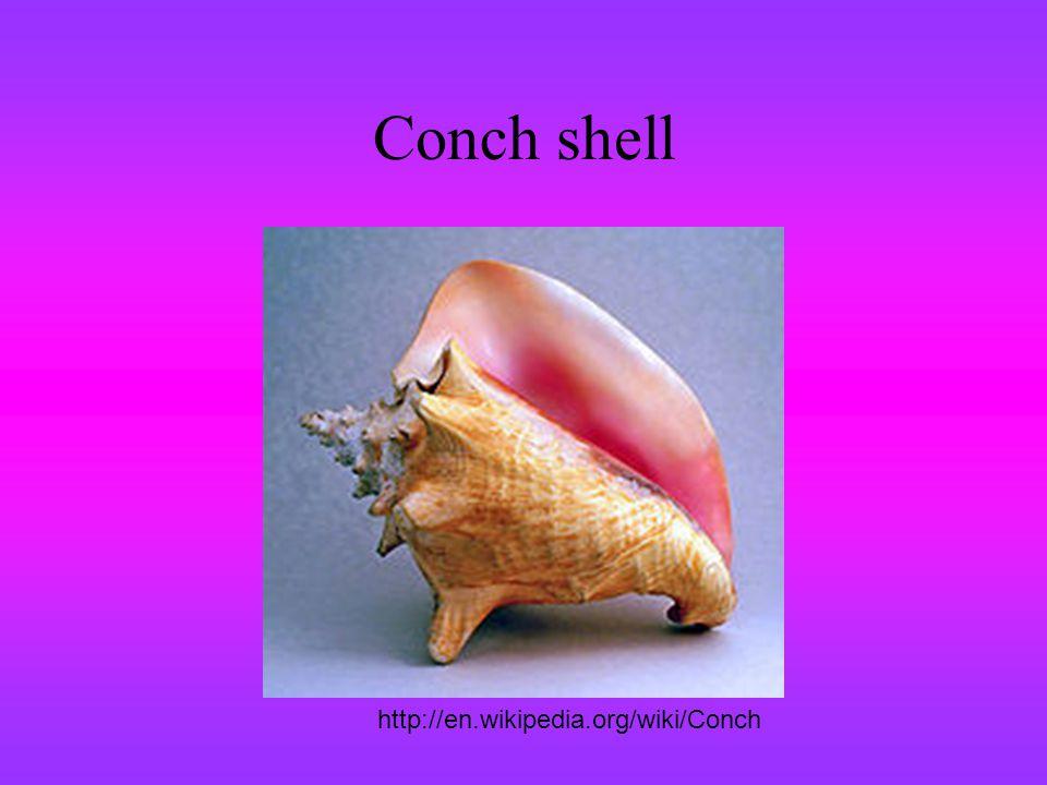 Conch shell http://en.wikipedia.org/wiki/Conch