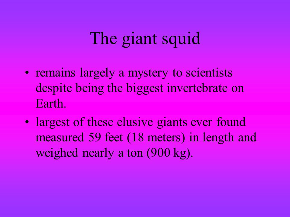 The giant squid remains largely a mystery to scientists despite being the biggest invertebrate on Earth.