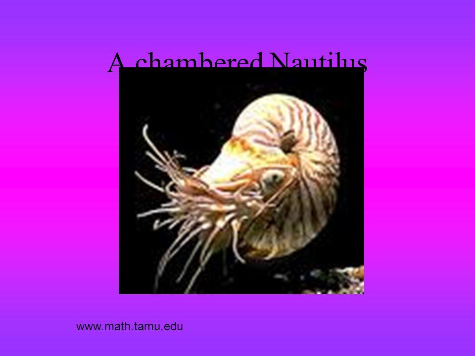 A chambered Nautilus www.math.tamu.edu