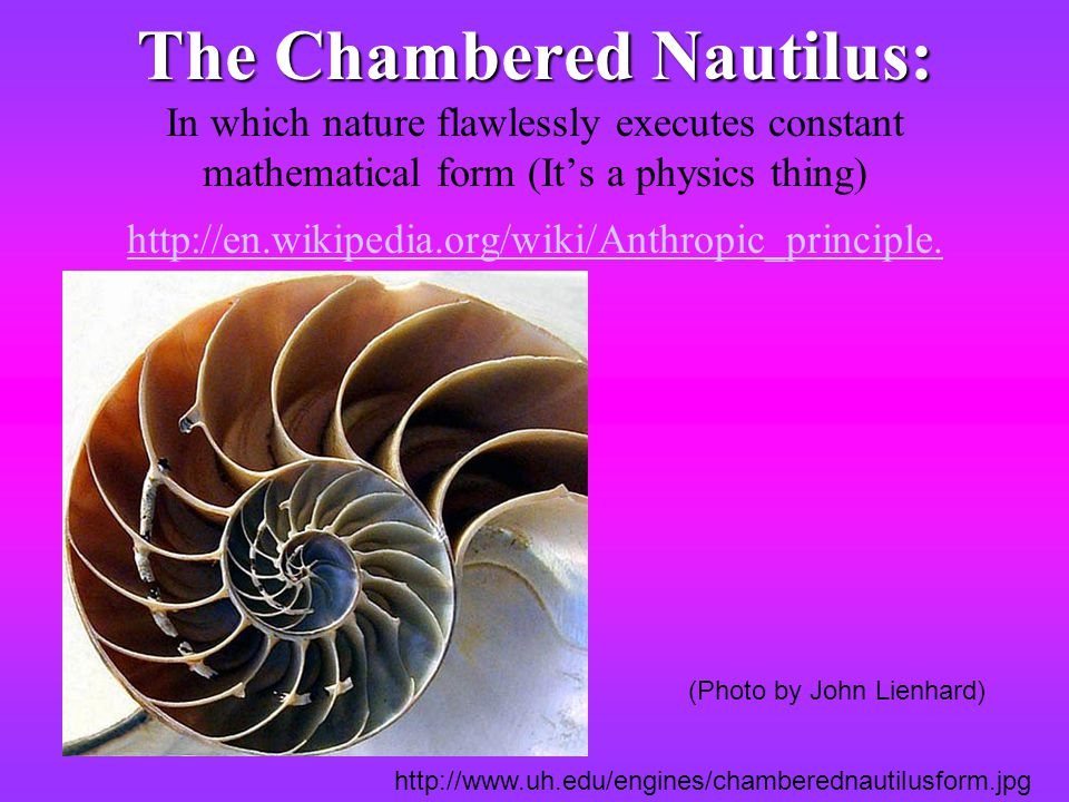 The Chambered Nautilus: In which nature flawlessly executes constant mathematical form (It's a physics thing) http://en.wikipedia.org/wiki/Anthropic_principle.