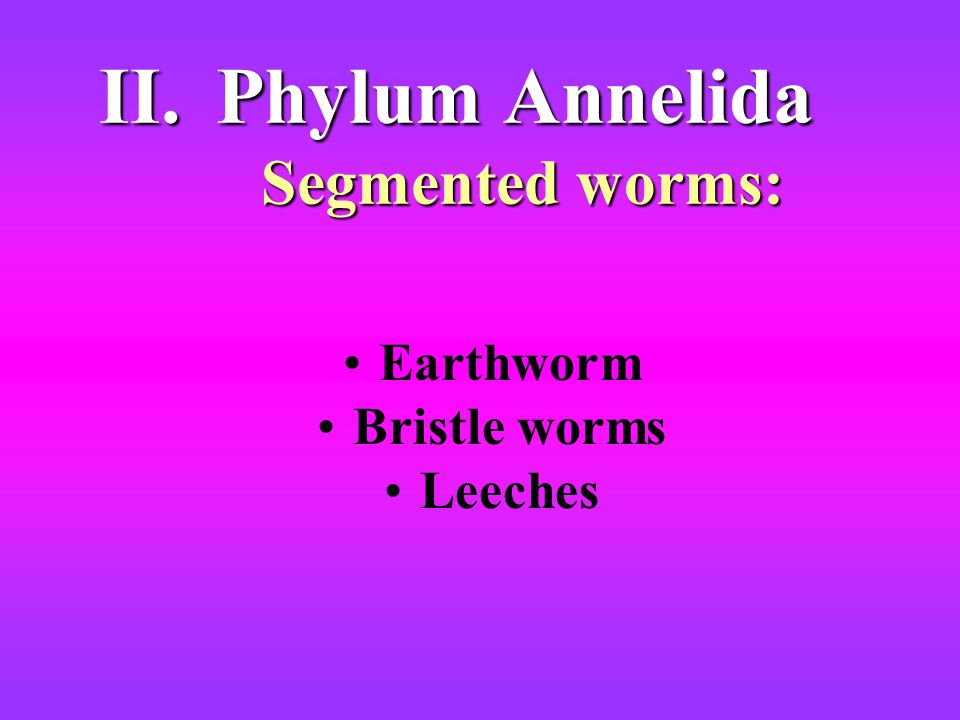 Phylum Annelida Segmented worms:
