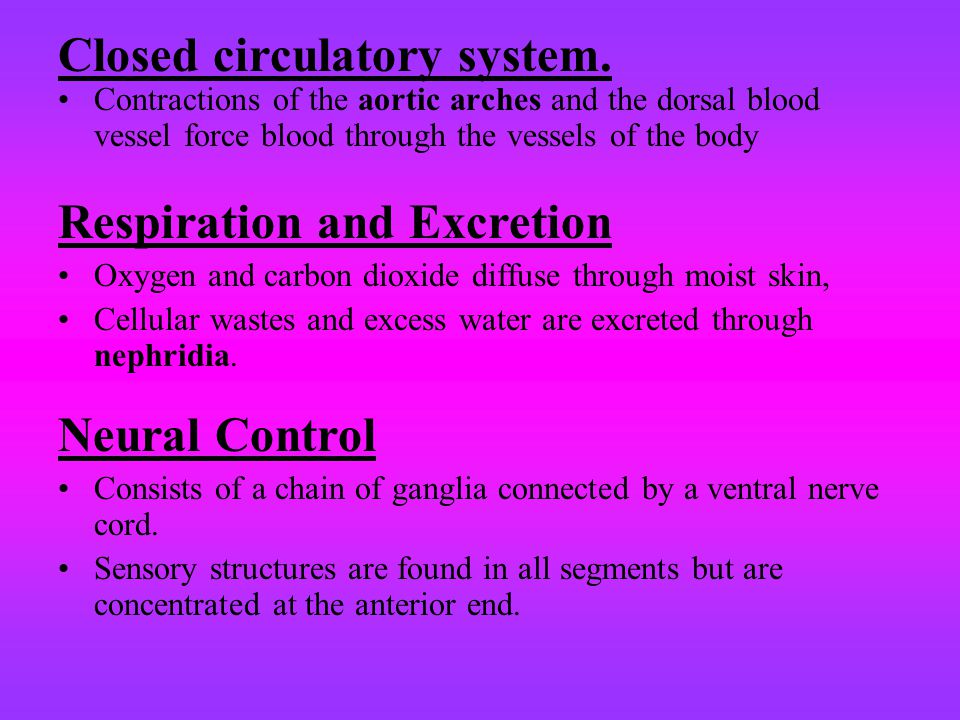 Closed circulatory system.