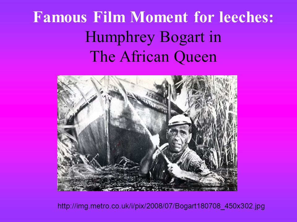 Famous Film Moment for leeches: Humphrey Bogart in The African Queen