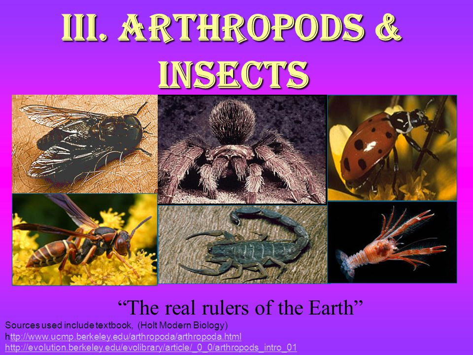 III. Arthropods & Insects