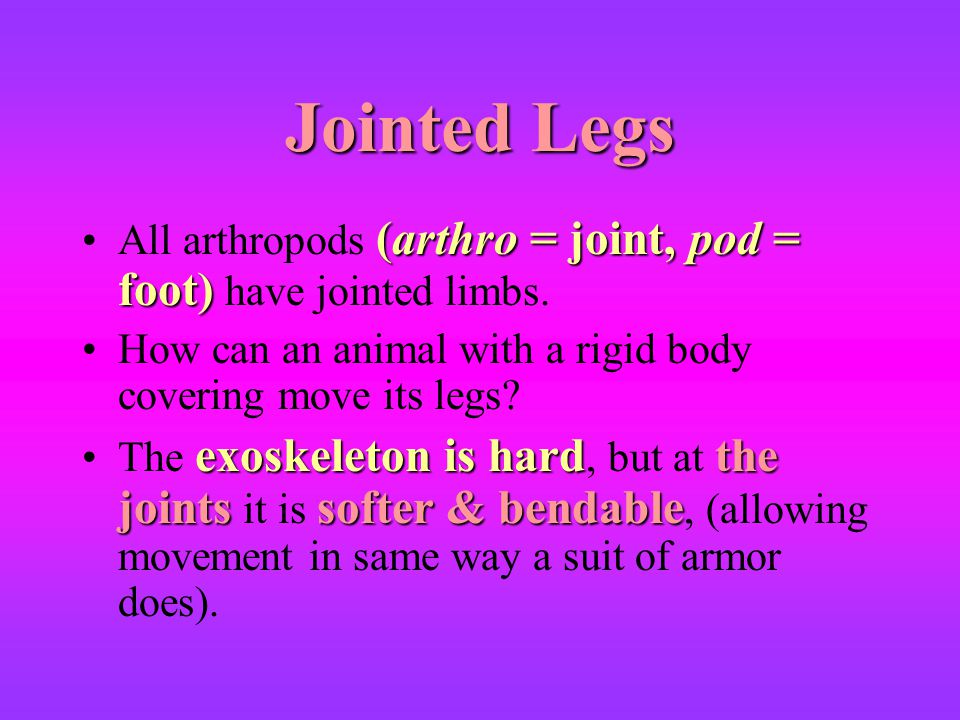 Jointed Legs All arthropods (arthro = joint, pod = foot) have jointed limbs. How can an animal with a rigid body covering move its legs