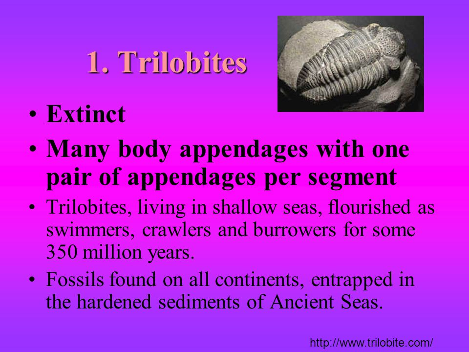 1. Trilobites Extinct. Many body appendages with one pair of appendages per segment.
