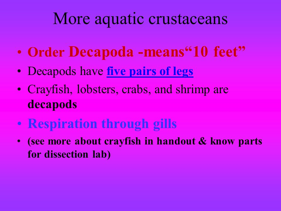 More aquatic crustaceans