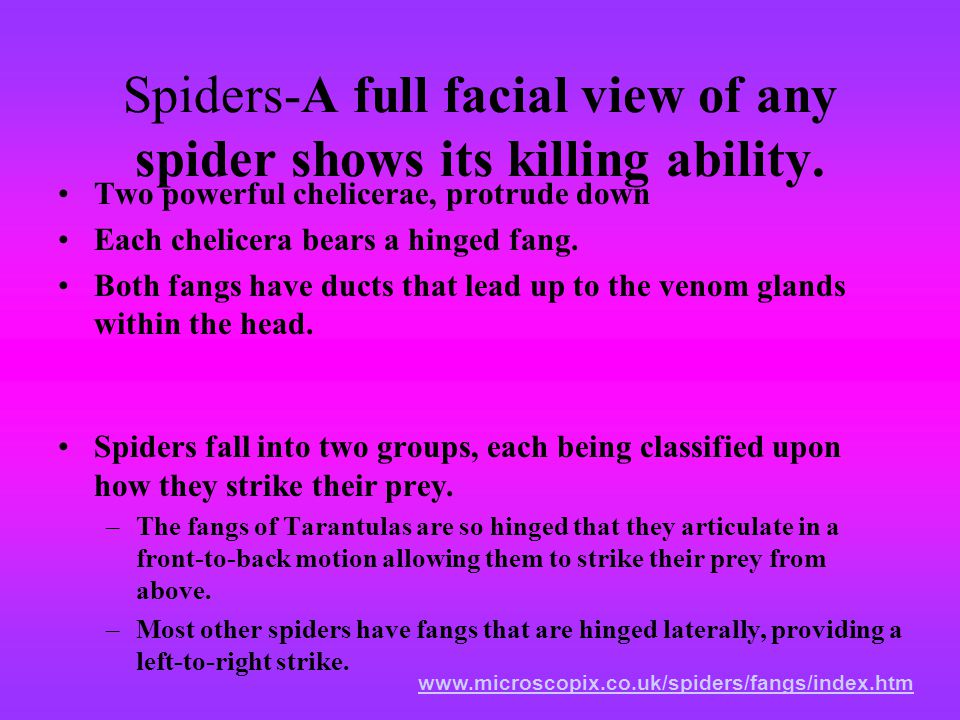 Spiders-A full facial view of any spider shows its killing ability.