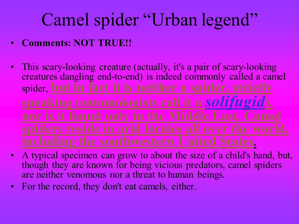 Camel spider Urban legend