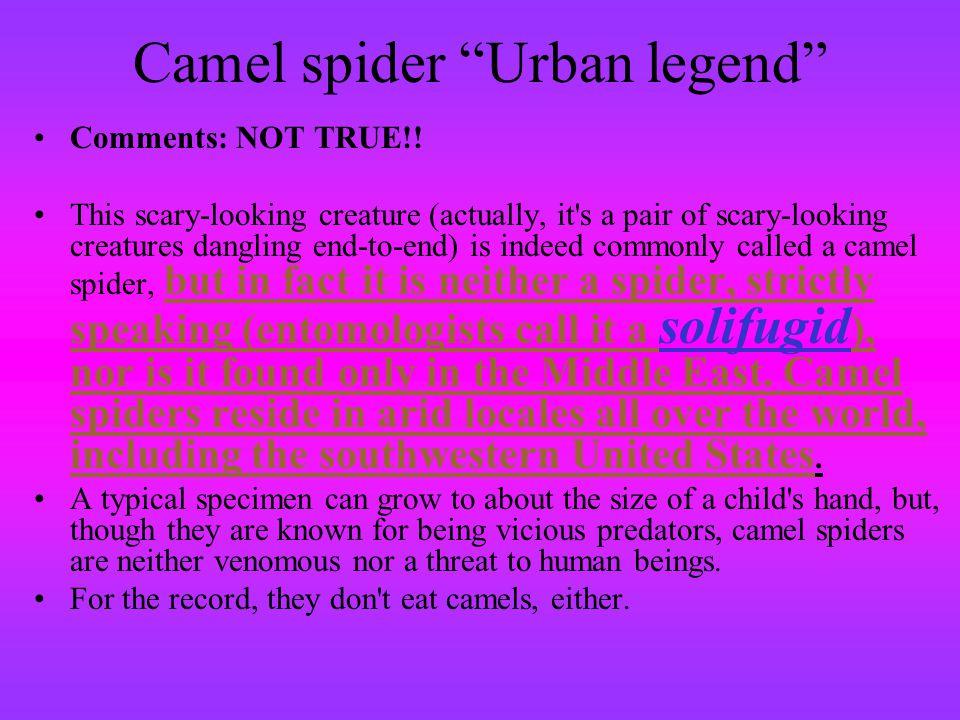 Camel spider Urban legend