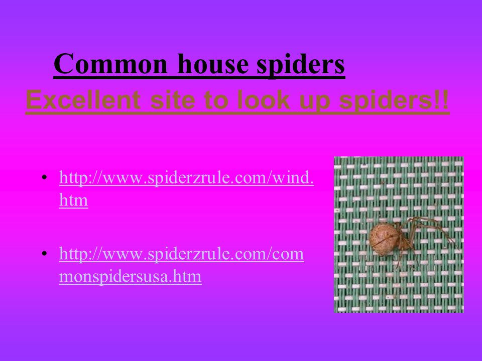 Common house spiders Excellent site to look up spiders!!