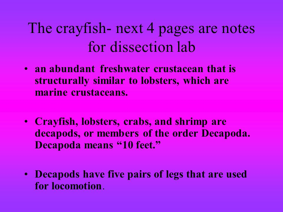 The crayfish- next 4 pages are notes for dissection lab