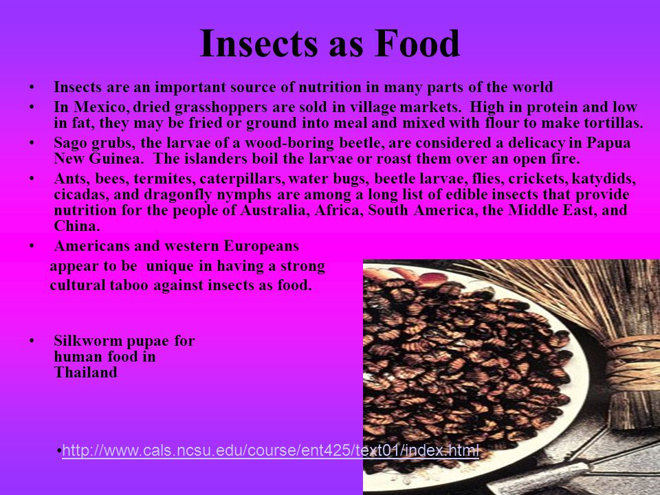 Insects as Food Insects are an important source of nutrition in many parts of the world.