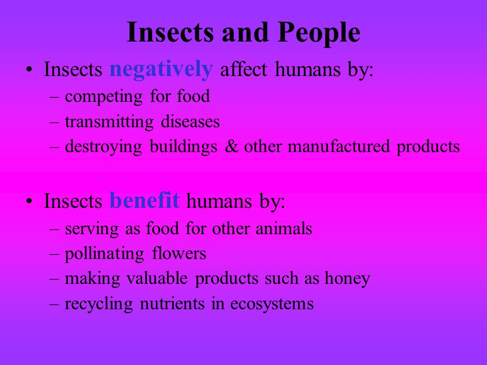 Insects and People Insects negatively affect humans by: