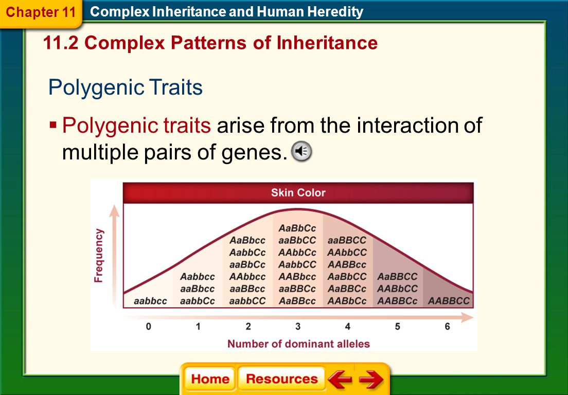 Chapter 11 Complex Inheritance and Human Heredity Complex Patterns of Inheritance. Polygenic Traits.