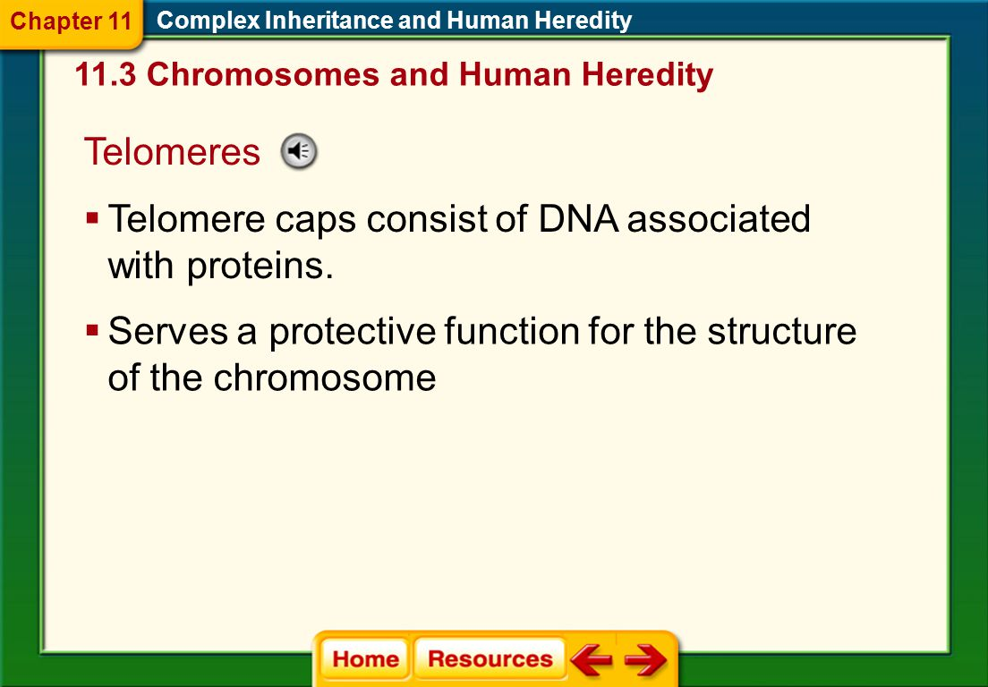 Telomere caps consist of DNA associated with proteins.