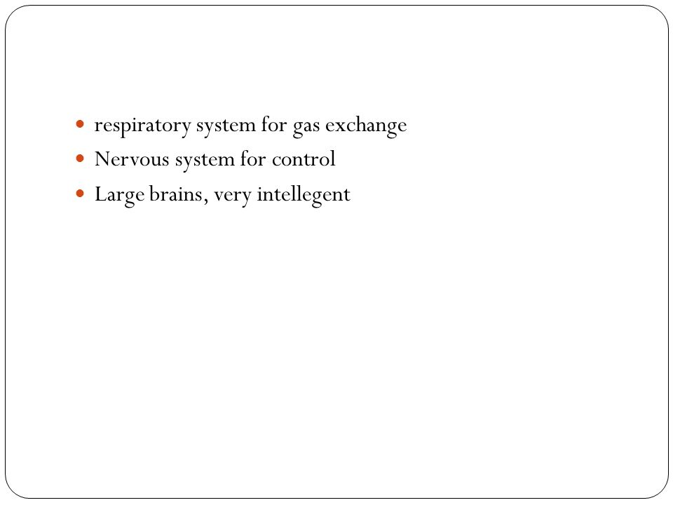 respiratory system for gas exchange