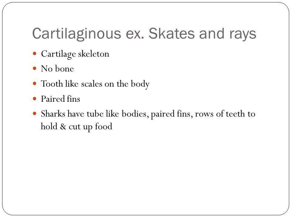 Cartilaginous ex. Skates and rays