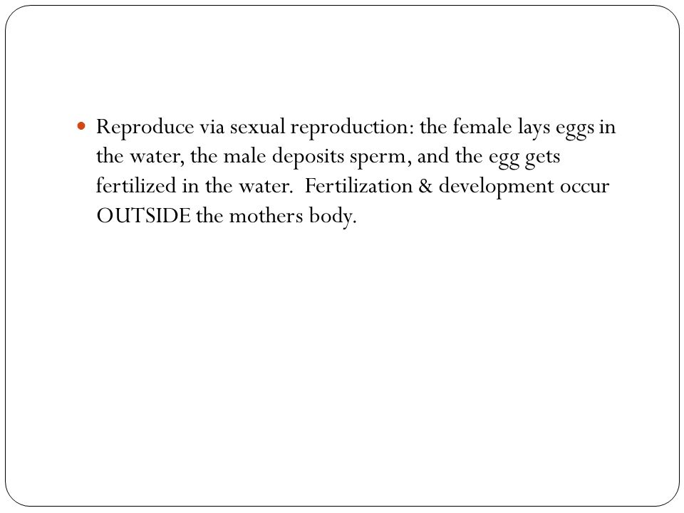 Reproduce via sexual reproduction: the female lays eggs in the water, the male deposits sperm, and the egg gets fertilized in the water.