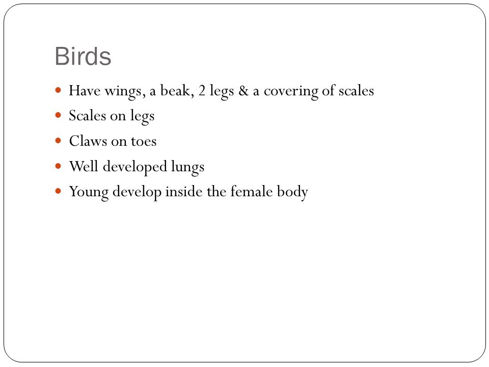 Birds Have wings, a beak, 2 legs & a covering of scales Scales on legs